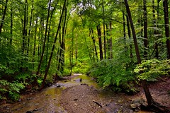 Dancing Under the Trees with the Wind as My Music (Cuyahoga Valley National Park)