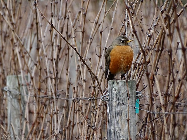 Perched for Budbreak