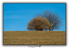Trees in the fields