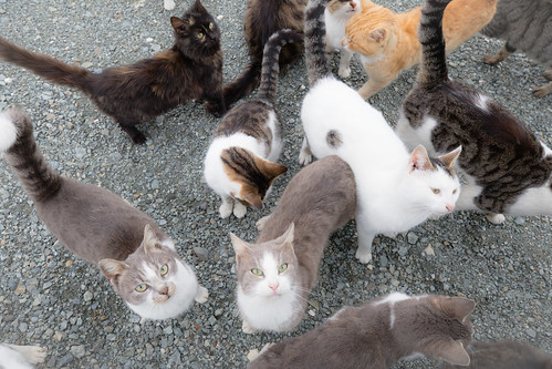 Cats at Panagia Stazousa (3)