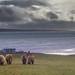 Martin's Herd (Explored) by Impact Imagz