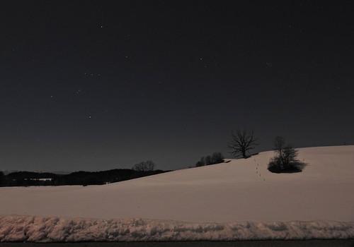 Snow Moonlight