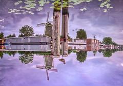 Purple Amsterdam Upsidedown2