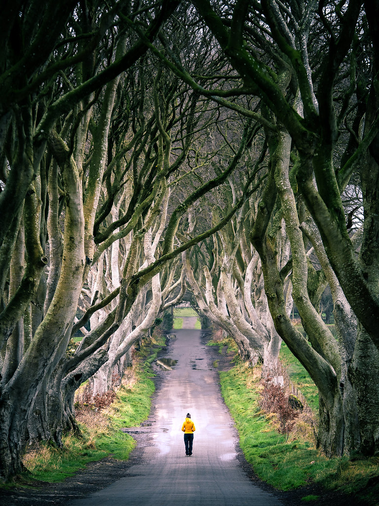 The Dark Hedges, Northern Ireland picture