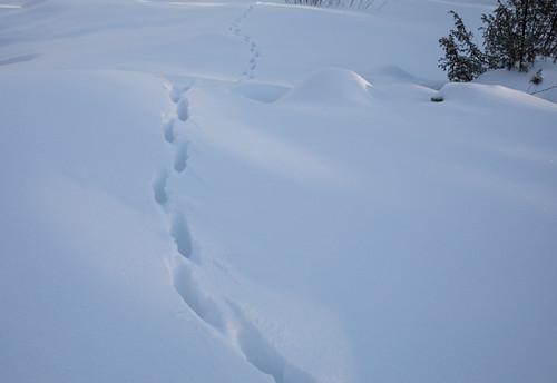 L'épaisseur de neige...