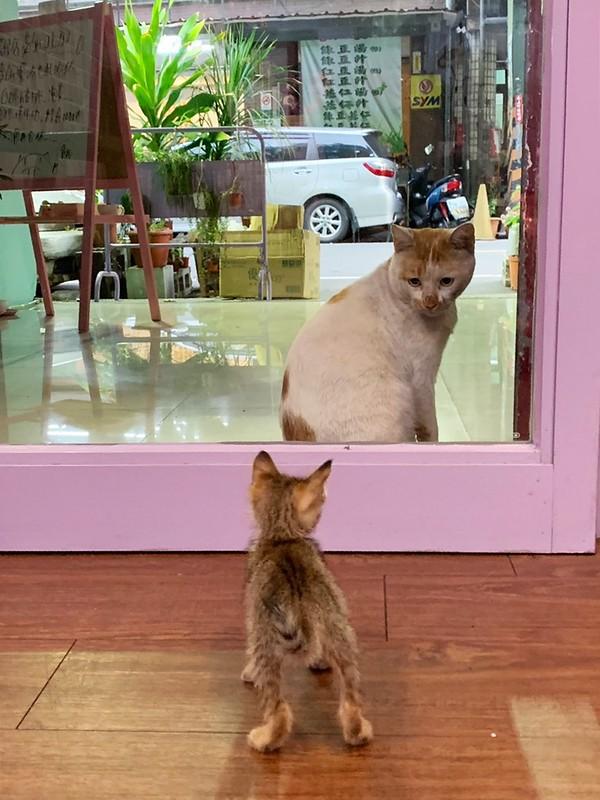 流浪貓阿珠,阿珠,阿珠貓咪 @陳小可的吃喝玩樂