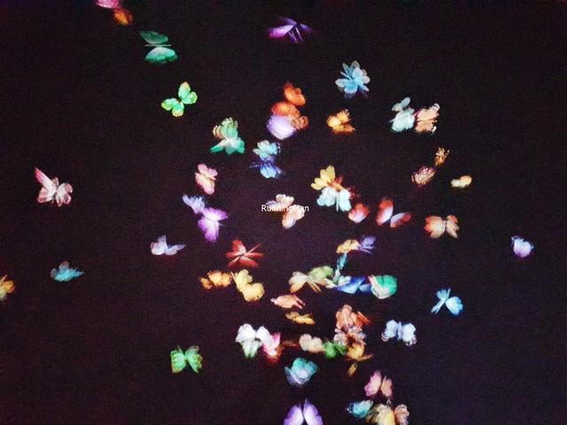 Nature - Flutter Of Butterflies Beyond Borders