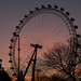 London-Eye-South-Bank-London-130-E-W-0013