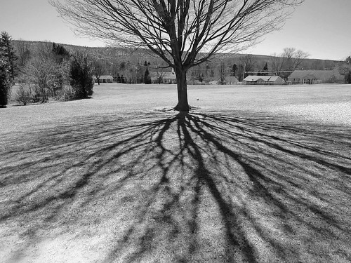 Bare Tree with Shadow Limbs