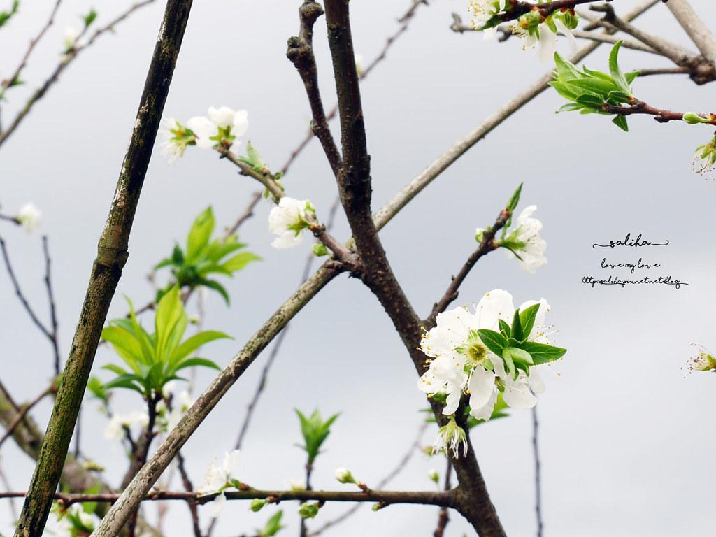 台北貓空一日遊踏青親子登山景點推薦樟樹步道 (5)