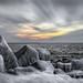 Frozen Shorea