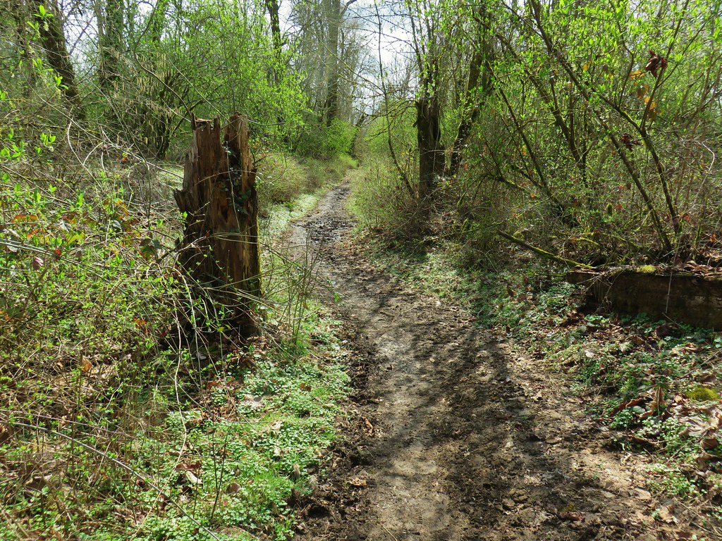 Equestrian trail in Willamette Mission State Park