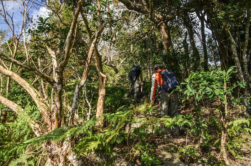 登見晴山步道 (11)