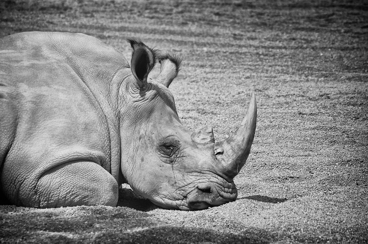 Zoos / Parcs animaliers - Page 26 46955483512_b319dd4849_o