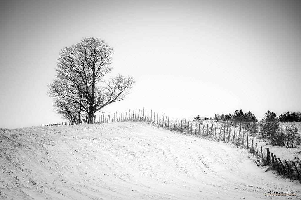 Un arbre en noir et neige / A Tree In Black & Snow