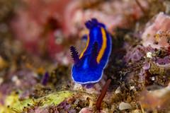 nudibranch9Feb9-19