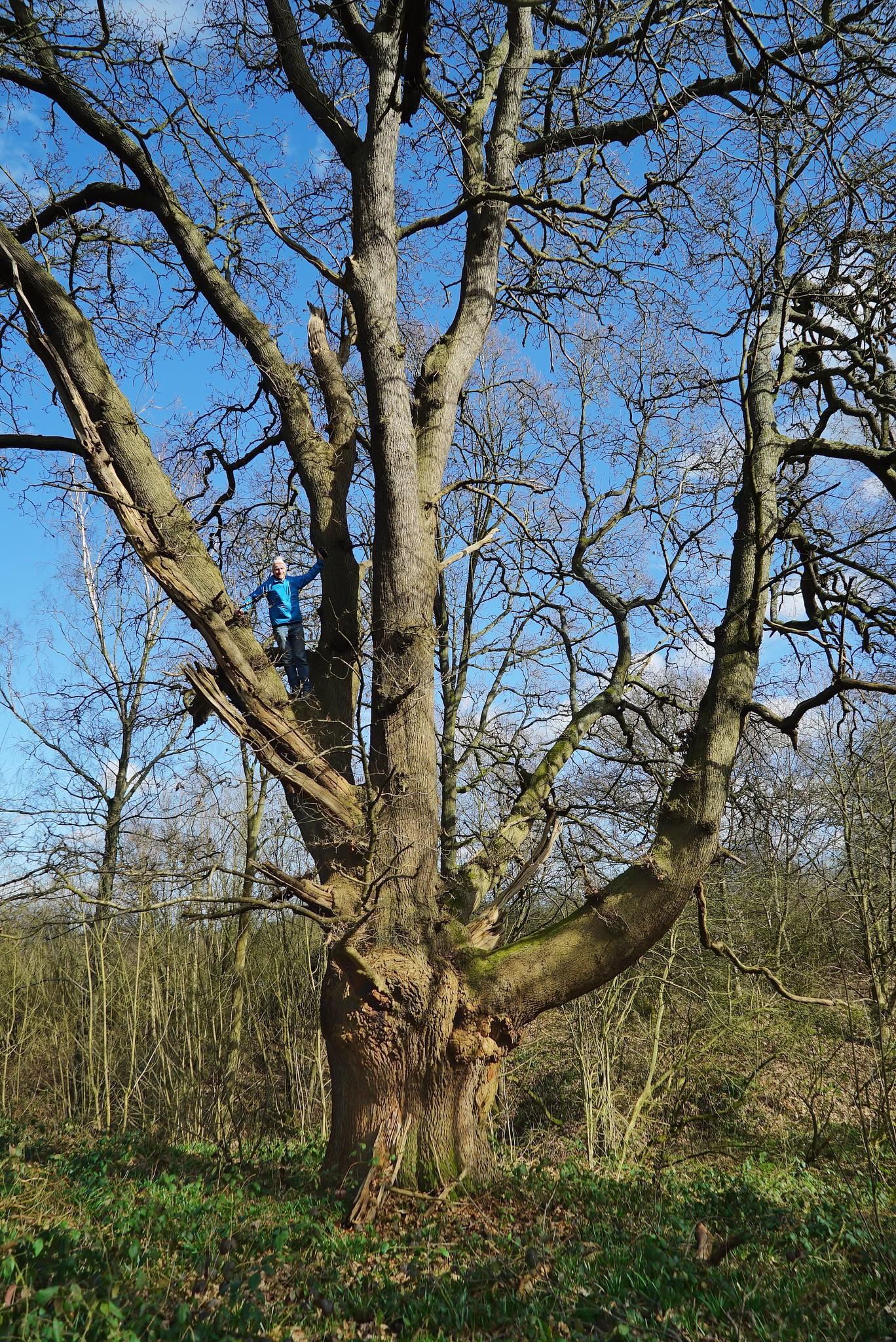 March Tree Climb
