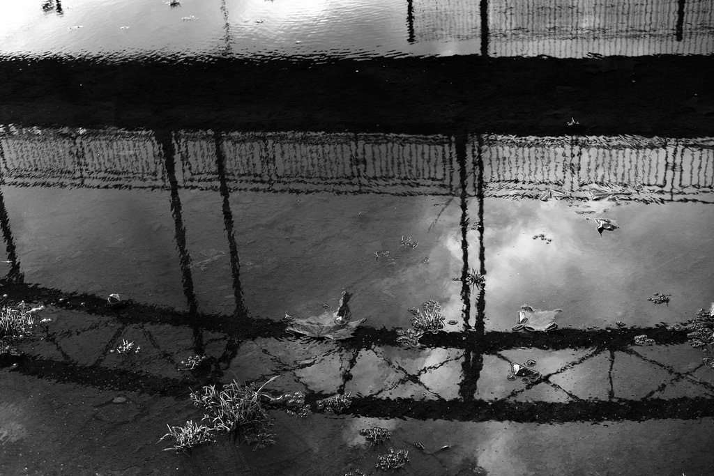 Rain Puddle Pictures