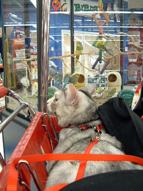 tessie-cart+birds