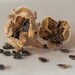 Hollyhock Seed Pods