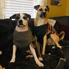 Jack in Kenning in Sweaters