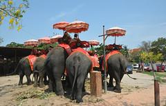 Tailandia 89