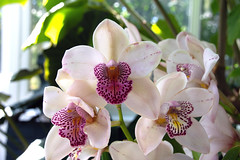 2019 Orchid Show-39