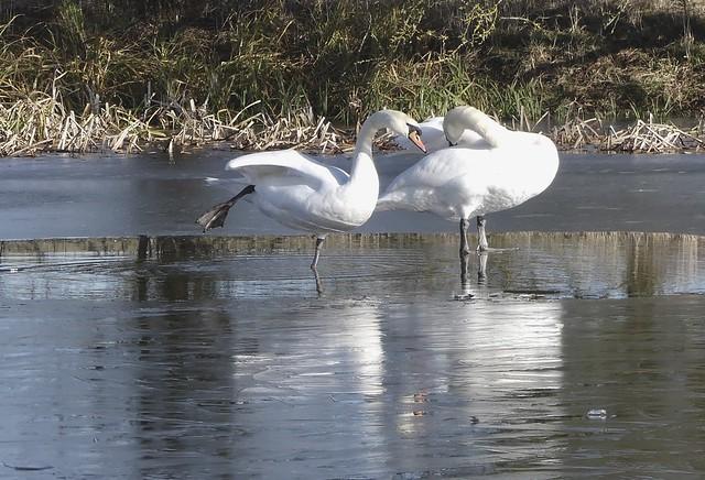 Swan yoga, Panasonic DMC-FZ330