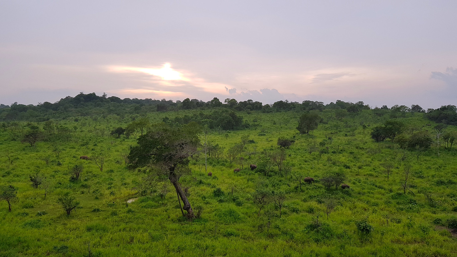 VER ELEFANTES SALVAJES EN SRI LANKA ver elefantes salvajes en sri lanka - 32032830107 3551764cf7 h - Ver elefantes salvajes en Sri Lanka