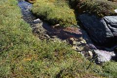 In Rondane Nasjonalpark
