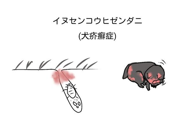 ヒゼンダニによりかゆみの強い犬
