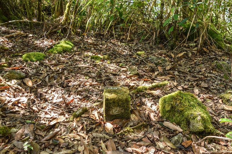 江坡古山山字森林三角點(Elev. 1550 m) 1