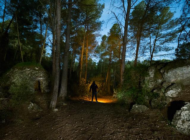 en el bosque 39671217593_c96dcebdde_z