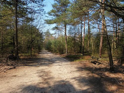Nature area Sallandse Heuvelrug