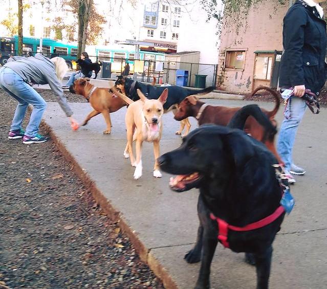 Eclipse-en-el-parque-canino