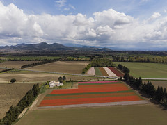 Tulips field - Jonquiere, France - Photo of Sarrians