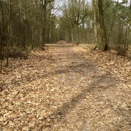 rustige duurloop in het bos
