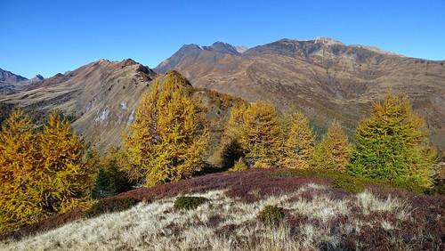 Phantastische Herbstfarben