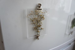 herbarium fridge magnets DSC06299