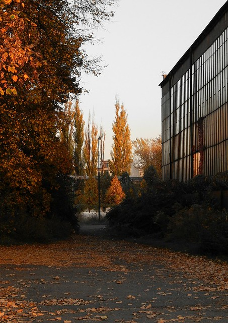 Autumn in factory district