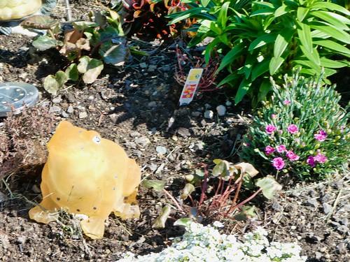 2019-04-10 - Landscape Photography - Garden - Flowers & Decorations, Set 2