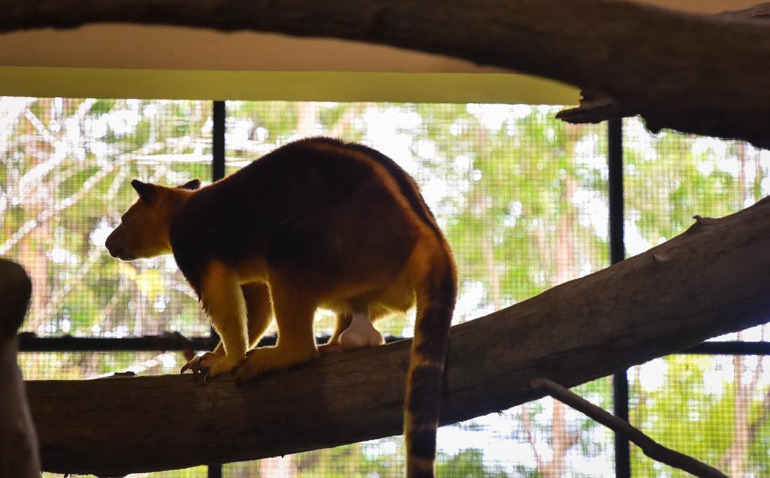 Singapore-zoo-(50)