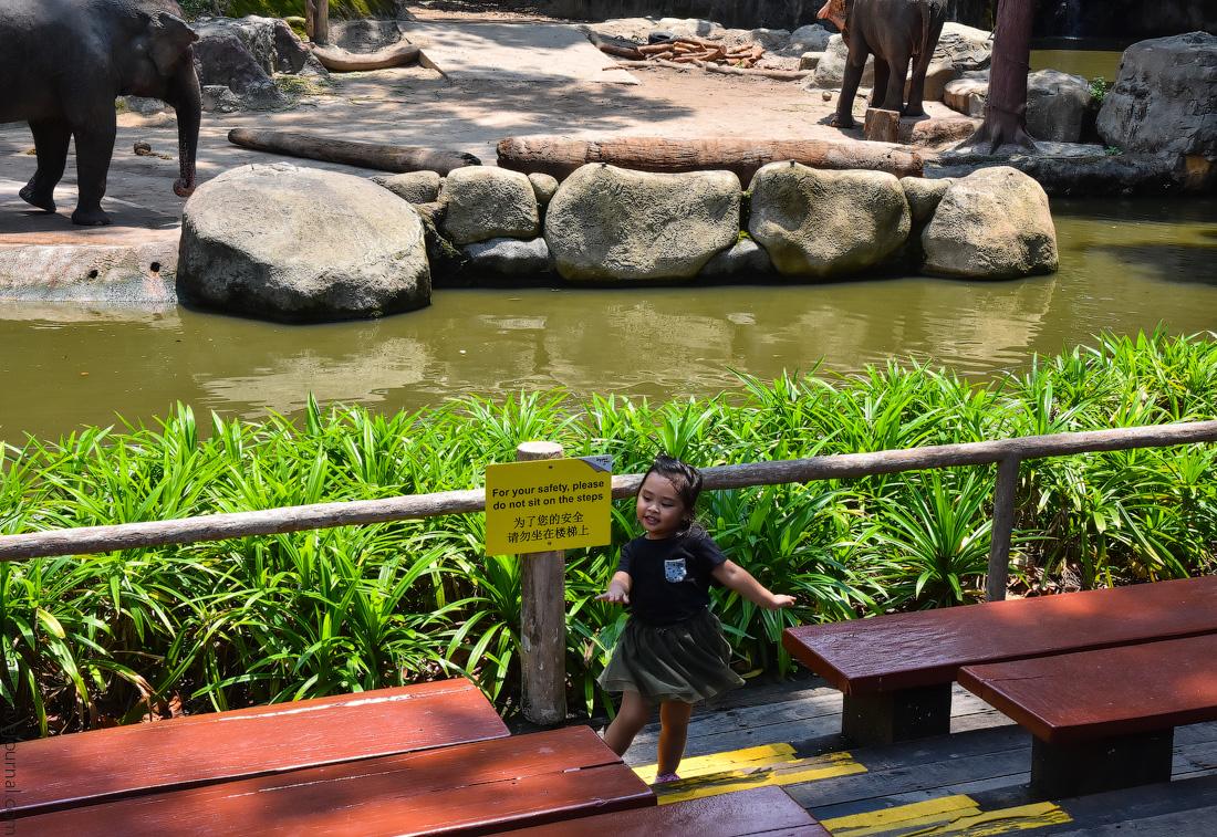 Singapore-zoo-(48)