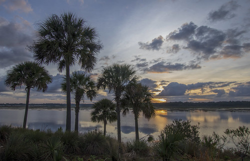 february 2019 kevinpovenz florida orlando thevillages villages palmtrees sunrise early earlymorning morning morningsky clouds sky outside outdoors shoreline lake water reflection lakesumpter canon7dmarkii sigma blue