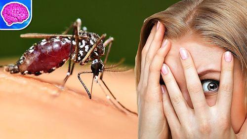 Gejala dan Faktor Penyebab Malaria