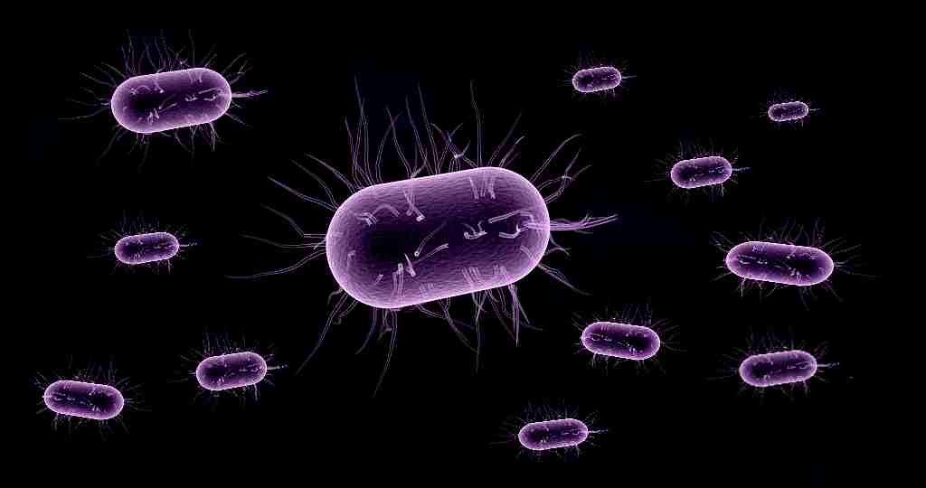 un-nouveau-mécanisme-bactérie-contre-antibiotiques