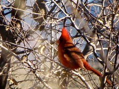 Arizona   -   Sierra Vista   -   My Cardinal    -   2012
