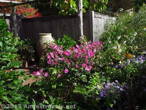 Medeterranian Garden 1
