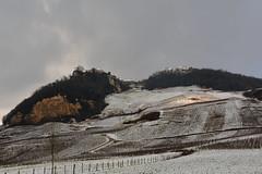 Château-Chalon .Un rayon de soleil au milieu des vignes
