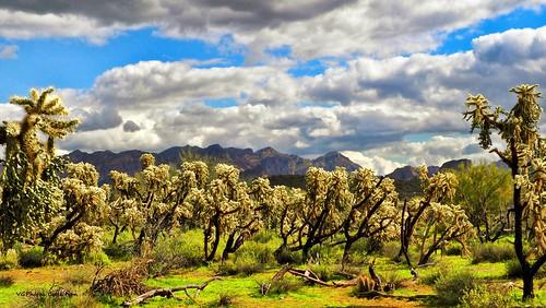 Arizona Natives